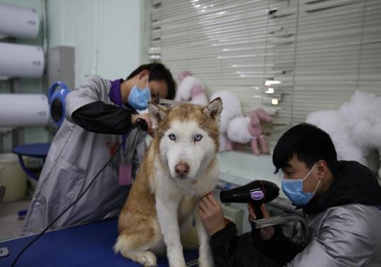 宠物美容师薪水高吗 - 北京培训新闻