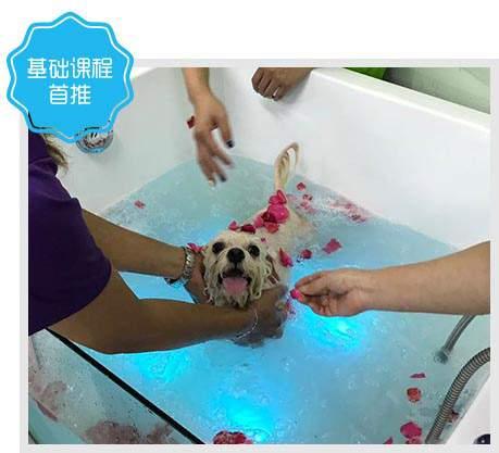 北京C级宠物美容班