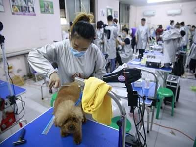 宠物美容师在平日里工作有没有被咬的危险