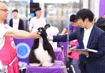 北京B级宠物美容师班