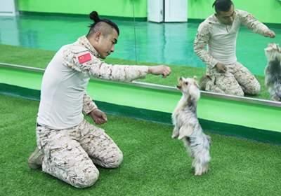 北京宠物行为全能训导班(网课+面授)