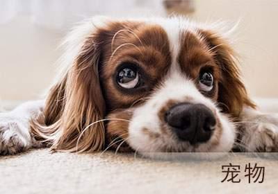 C级宠物美容师培训